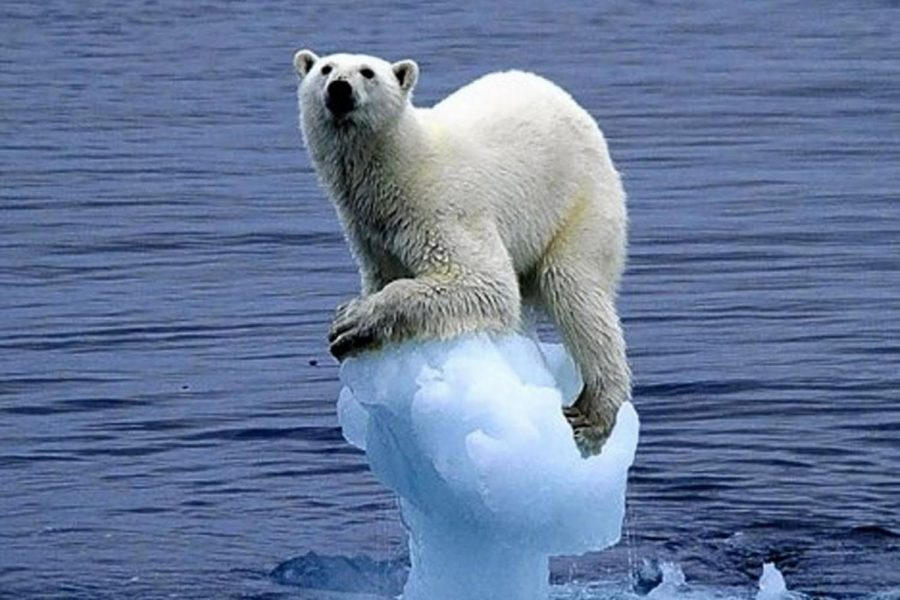 The Devastating Effects of Global Warming
